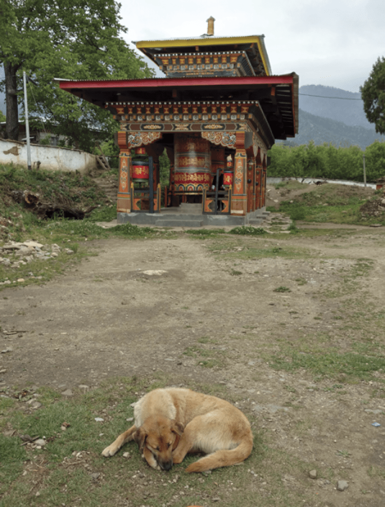 Saving Dogs In Bhutan