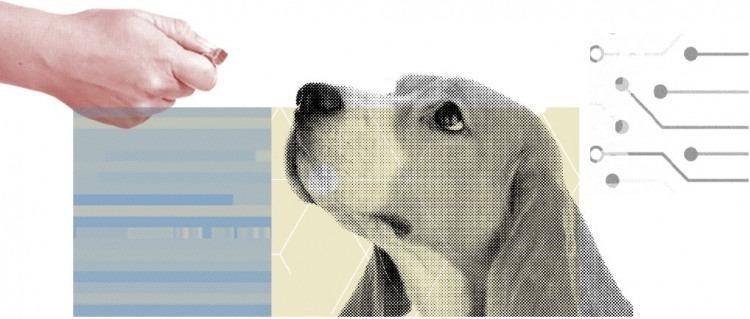 online dog training, remote dog training