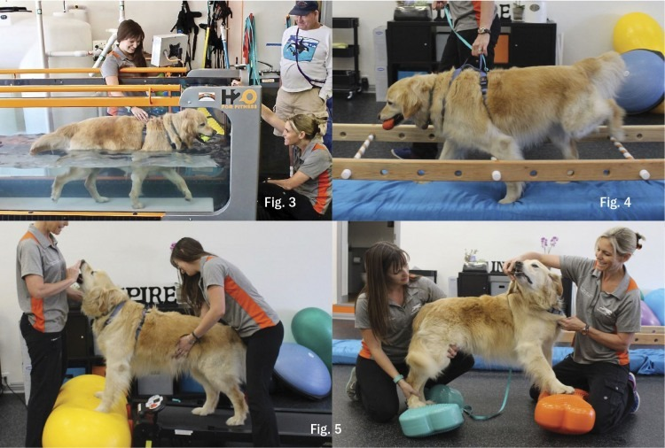 A Golden Retriever Makes a Remarkable Recovery | The Bark