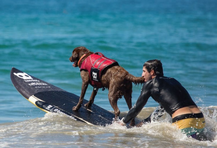 Surfboarding with dogs in Brazil