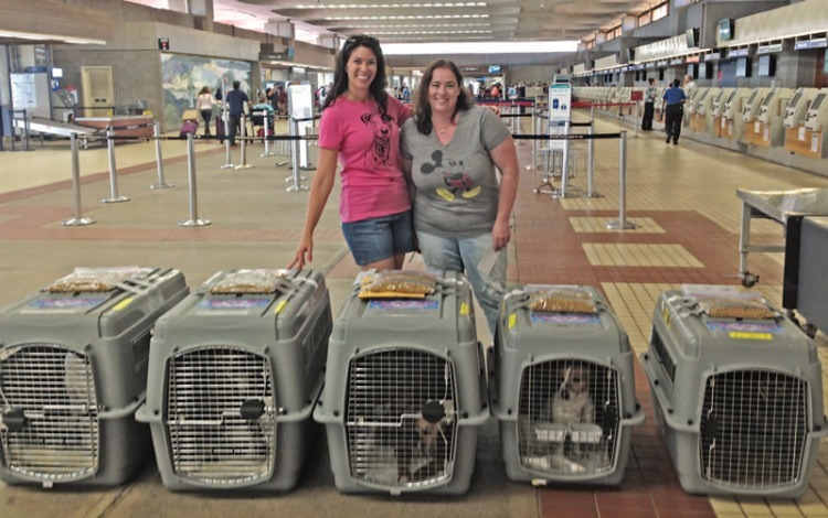 Vacationers Jenny Collins (left) and Amy Freeman at the airport in Maui with crated dogs bound for Portland, Ore.