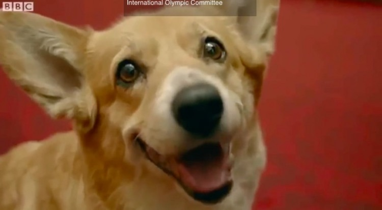 Last Corgi From Royal Lines Has Died