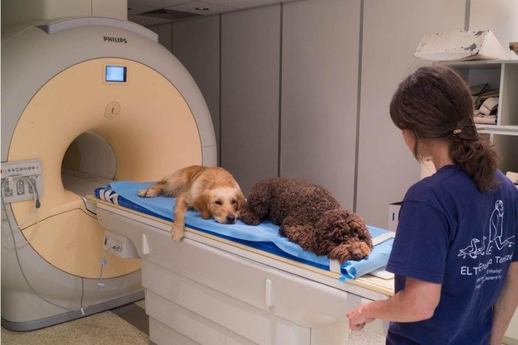 Dogs Understand Our Words - Study with MRI