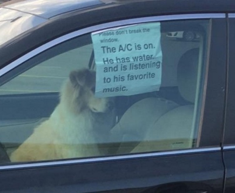 Protecting Dogs In Hot Cars The Bark