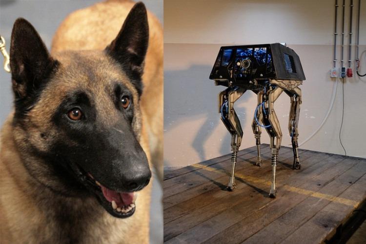 Belgian Malinois / Dog Robot