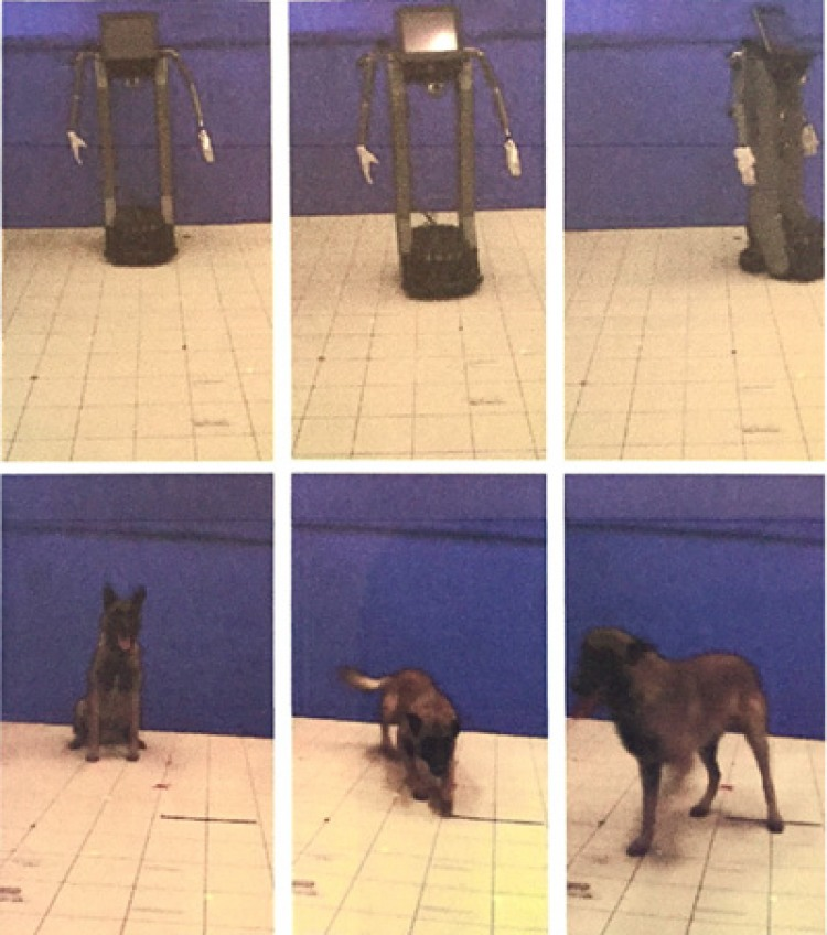 """Photo from """"Humans attribute emotions to a robot that shows simple behavioural patterns borrowed from dog behavior"""" (Gásci et al. 2016)"""