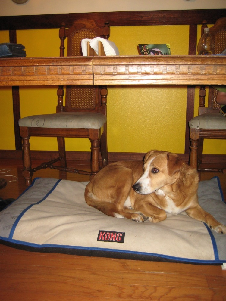 Dog Meets Bed