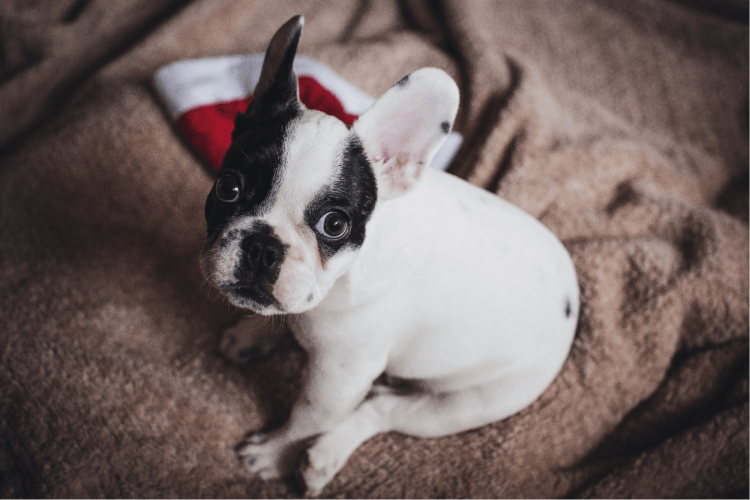 How To Get Your Dog's Attention | The Bark