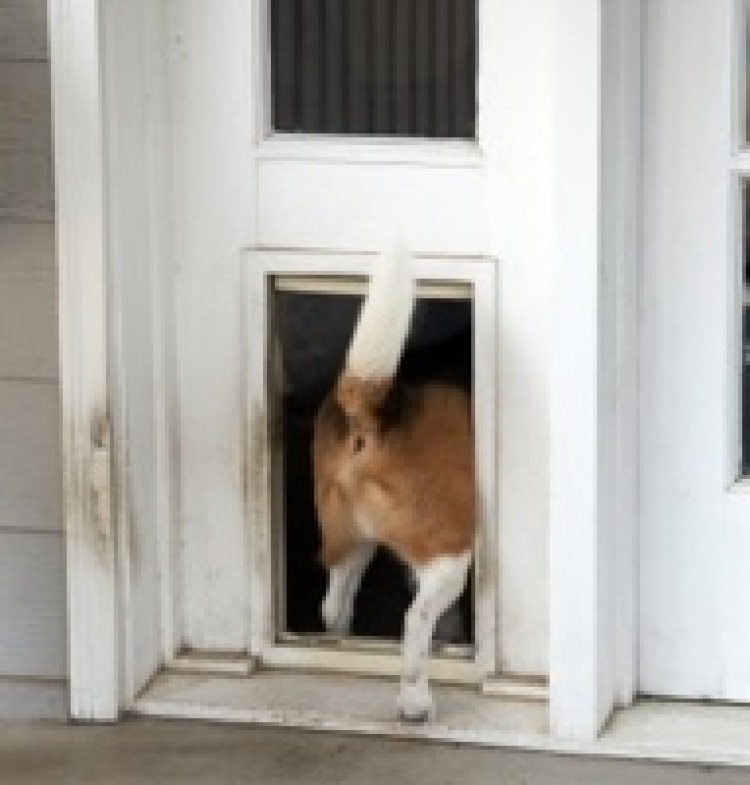 Burglar Goes Through Doggy Door & Burglar Goes Through Doggy Door | The Bark pezcame.com