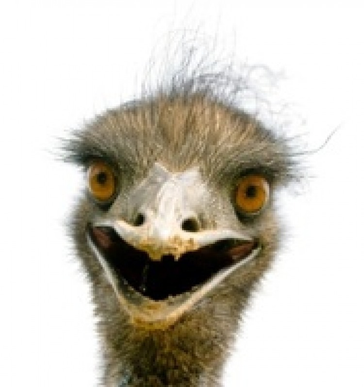 An Emu Who Acts Like A Dog