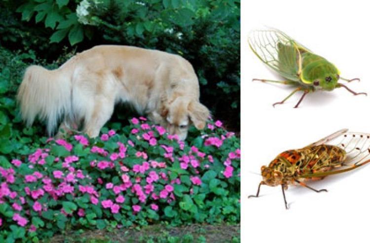 humor fletcher cicadas