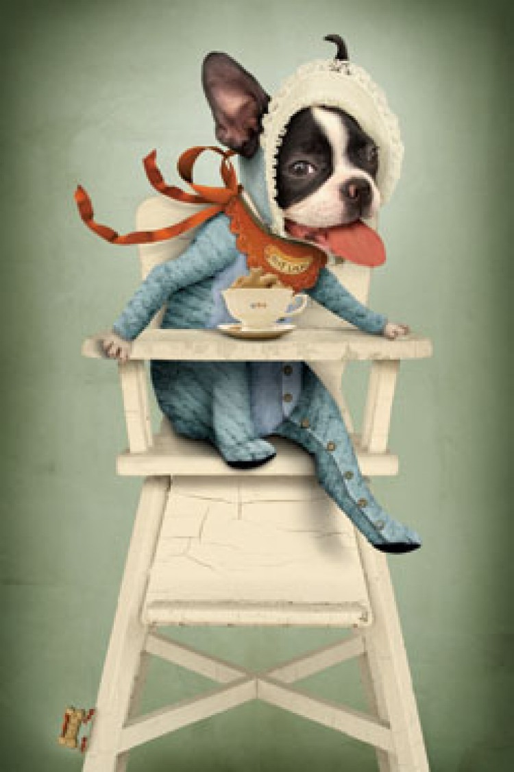Dog in highchair