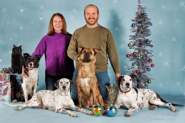 Christmas photo holiday portrait dog cat pet