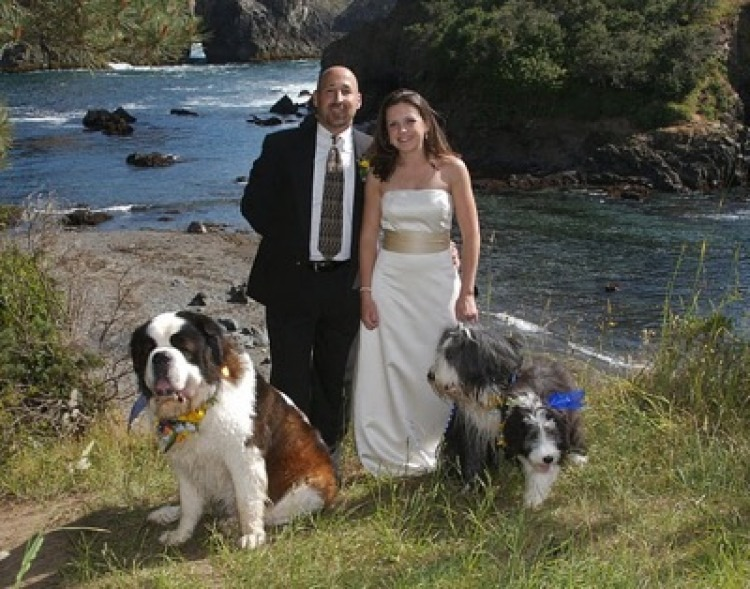 Four Dogs And A Wedding The Bark