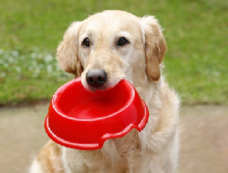 Does Dog Food Have To Be Safe For Human Consumption