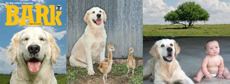 Riley as cover dog Canis lupus familiaris with Balearica regulorum
