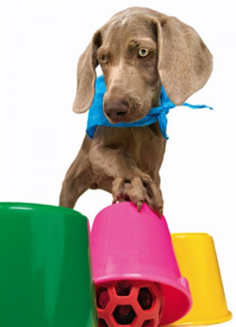 In the classic game, a ball is placed beneath one of three pails. Your dog shows