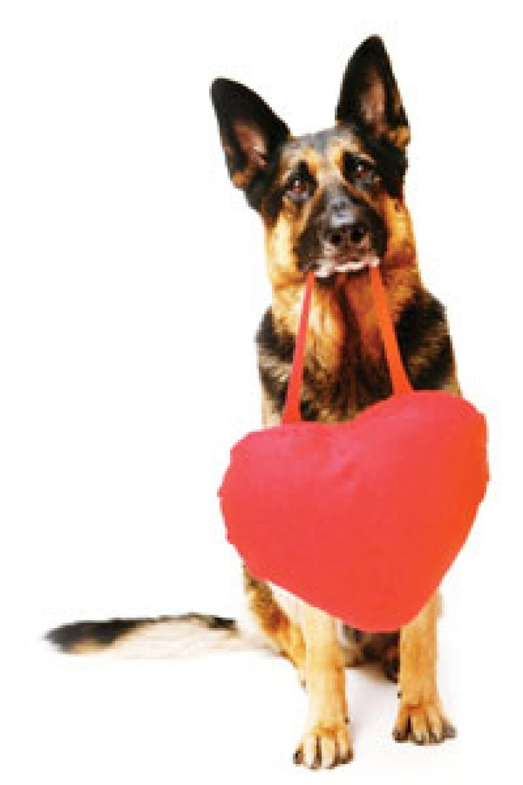 Dog Food Recipes: Valentine Liver Treats