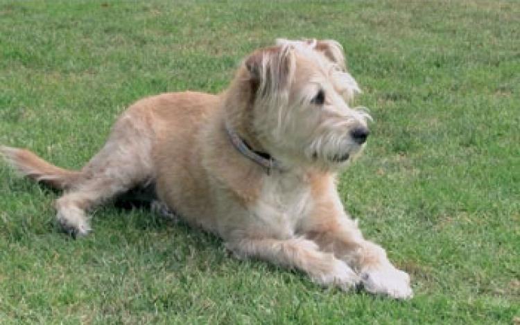 Rescue Wonder Dog Charlotte