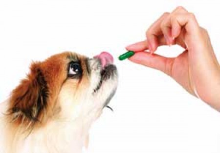 More Affordable Pet Meds