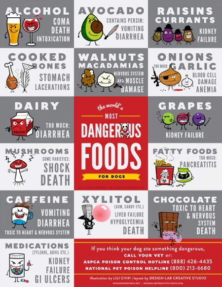 Alchohol, Avocado, Raisin, Currants, Cooked Bones, Walnuts, Macadamias, Onions and Garlic, Dairy, Mushrooms, Caffeine, Medications, Grapes, Fatty Foods, Xylitol, Chocolate