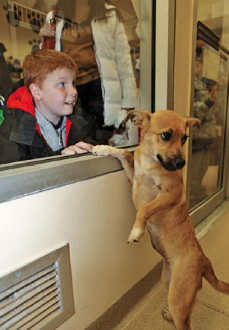 That doggie in the window, 21st-century version.