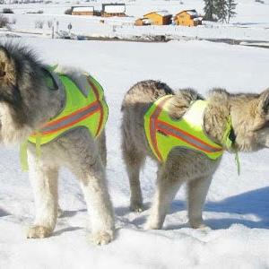 Do Wolfdogs Make Good Pets?   The Bark