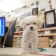 Teddy On Desk