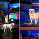 Left: Chicalina Right: Babu on the set of The Daily Show