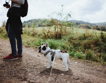 Understanding Canine Social Hierarchies | The Bark