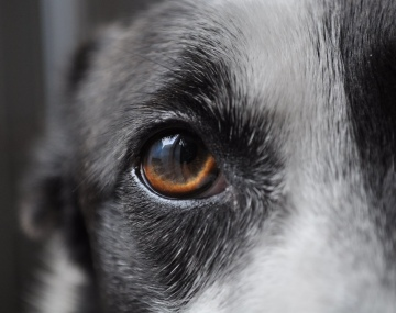 Vet Advice: Dog Flea Allergy and What to Do About It | The Bark