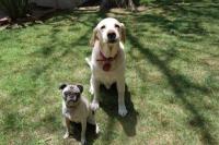 Buddy and Bessie