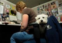 Amazon.com Dog-Friendly Workplace / Office