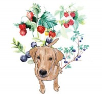 Labrador retriever and berries