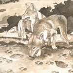sociable wolves