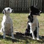 dog, training, sit, stay, obedience