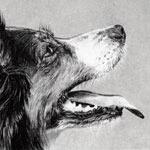 Illustration by Kathryn Hansen