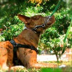 Tough Love: A Meditation on Dominance and Dogs