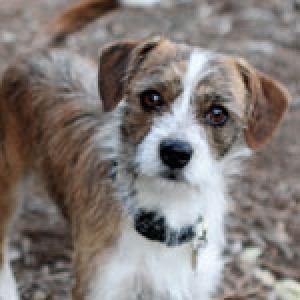 Charlie A stray joins The Bark's family