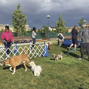 Building community: At Bay Meadows in San Mateo, Calif., a popular agility course, and Halloween social.