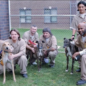 Greyhound Foster and Training Prison Program