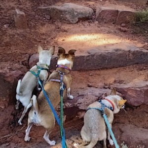 Take a Shelter Dog for a Hike