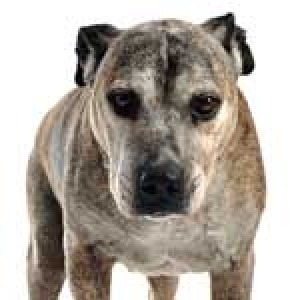 Senior Dogs with Arthritis