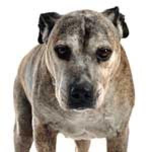 Senior Dogs with Arthritis