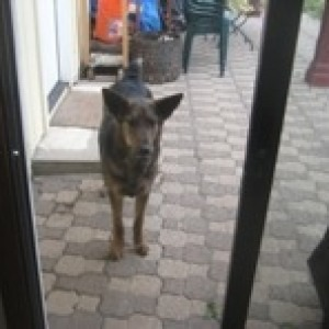 Dog stands outside of glass sliding door