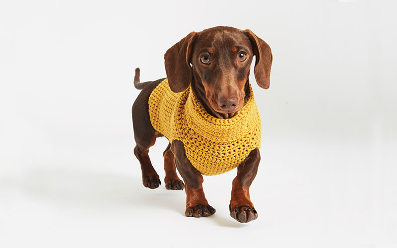 Knit Kit By Wool And The Gang The Bark